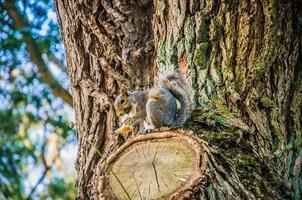 bruine eekhoorn op een boom foto