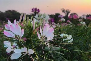 bloemen bij zonsondergang foto
