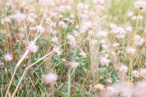 witte wilde bloemen gedurende de dag