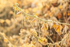 gele herfstbladeren foto