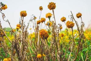 gele bloemen buiten foto