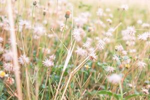 paardebloemen in een veld