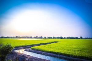 stroom door een groen veld