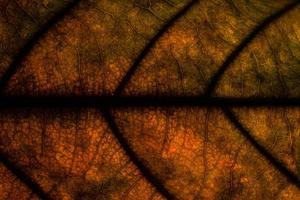 achtergrond textuur van een blad
