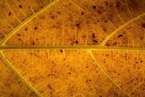 geel blad close-up