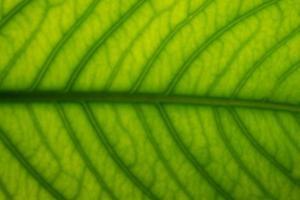 bruin bladpatroon