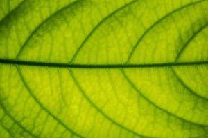 close-up van een groen blad