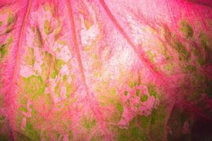 bladpatroon, close-up