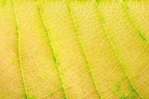 geel bladpatroon