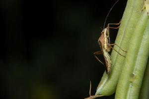 bruine huurmoordenaar op een plant