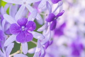 paarse bloem achtergrond