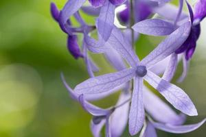 paarse bloem op groene achtergrond