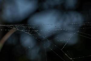 waterdruppels op het spinnenweb, close-up