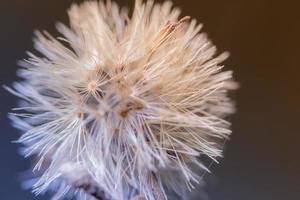 Wildflower op bruine achtergrond