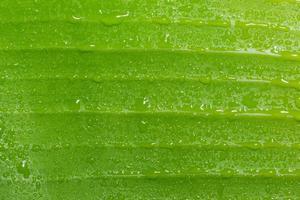 waterdruppels op een groen blad