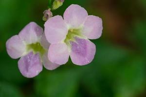 roze bloemclose-up