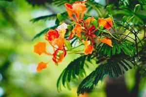 rode en oranje bloemen