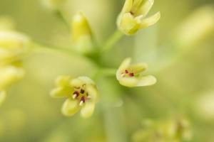 Wildflower close-up foto