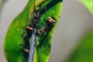 mieren op een bloem