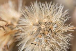 witte bloem close-up