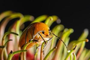 lieveheersbeestje op een bloem foto