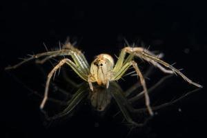 spin op zwarte spiegel