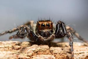 spin in de natuur