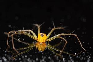 spin op een reflecterende achtergrond