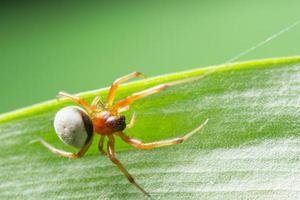 macro spin op een groen gebladerte als achtergrond foto