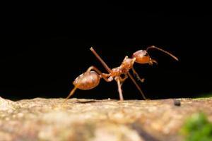 mier op een plant foto