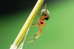 spin op een plant