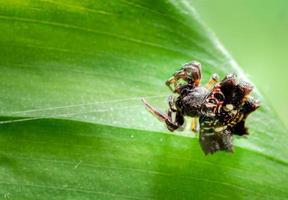 spin op een plant foto