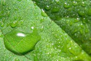 druppels op een groen blad