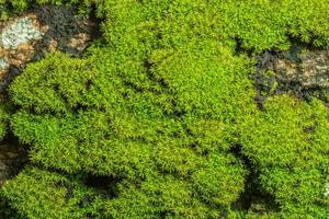 groene mos achtergrond