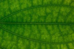 blad patroon achtergrond