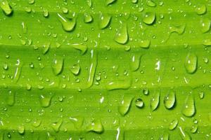 waterdruppels op plant