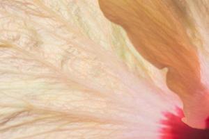 oranje bloemblaadjes