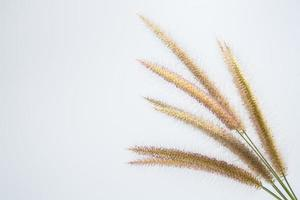 Wildflower op witte achtergrond