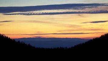 silhouet van bomen tijdens zonsondergang foto