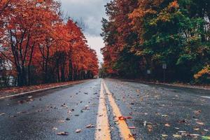 weg- en herfstbomen foto