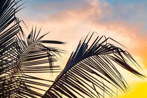 palmbomen tegen een zonsondergang foto