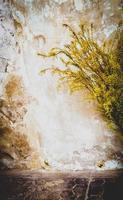 zonlicht door bladeren foto