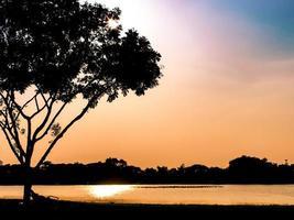 silhouet van een boom met een kleurrijke zonsondergang foto