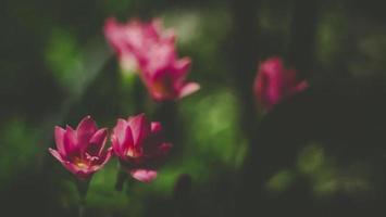 rode bloemen buiten foto