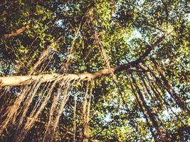 tropische regenwoudbomen