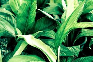 close-up van groene planten foto