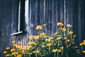 gele bloemen bij een gebouw foto