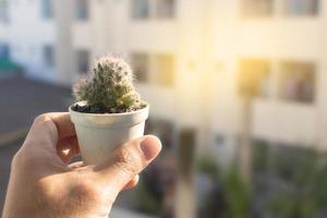 persoon met een ingemaakte cactus foto