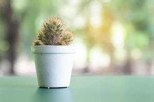 cactussen op een tafel foto