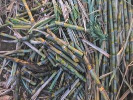 close-up van suikerriet foto